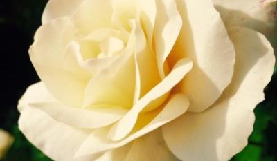 Ziua Mondială a Frumuseţii