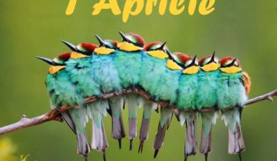Ziua Internațională a Păsărilor