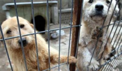 Ziua internațională a animalelor fără stăpân