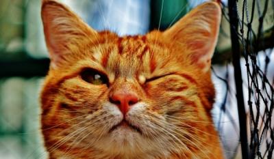 Ziua internațională a pisicii