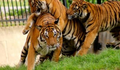 Ziua internațională a grădinilor zoologice și a parcurilor