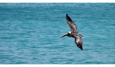 Ziua internațională a Mării Negre