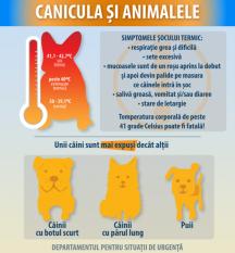 Protejează-ți câinele pe perioada de caniculă