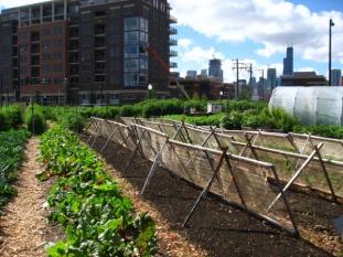Transformați resturile alimentare în îngrășământ pentru grădină!