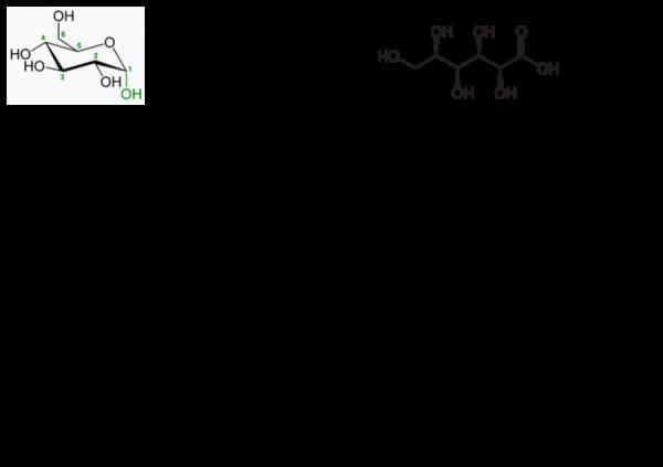 Acidul ascorbic (E300) - InfoCons vă oferă toate informațiile necesare desprew acest aditiv