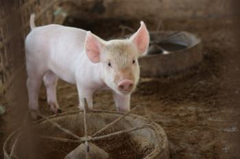 Pesta Porcină Africană confirmată într-o gospodărie din localitatea Lucieni, judeţul Dâmbovița