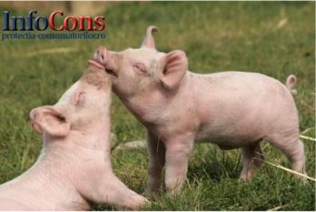 Misiune de audit din partea Comisiei Europene privind Pesta Porcină Africană