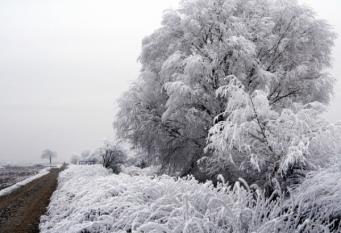 Ce efect are iarna asupra riscului de infarct