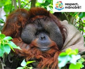 Uleiul de palmier și impactul asupra habitatului natural!