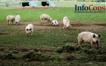 Actualizarea situației privind evoluția Pestei Porcine Africane
