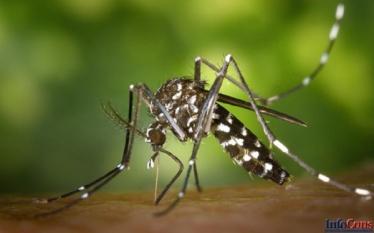 Importanţa economică şi pentru sănătatea publică- Virusul West Nile