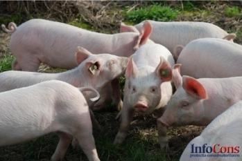 Controale ANSVSA în sectorul produselor alimentare de origine nonanimală noiembrie 2019