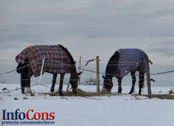 Recomandări ANSVSA pentru protejarea animalelor în perioadele cu temperaturi foarte scăzute, vânt puternic şi căderi mas