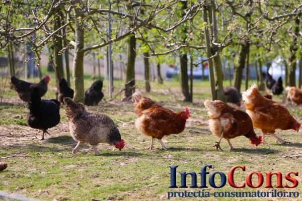 Controale A.N.S.V.S.A. privind carnea de pasăre și ouăle provenite din import și comerț intracomunitar