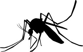 Recomandări  pentru evitarea imbolnăvirilor prin boli transmise de ţânţari